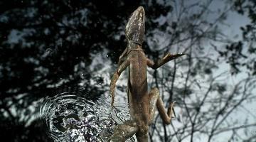 Lizard Leap
